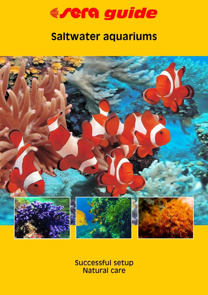Are You New To Saltwater Aquariums