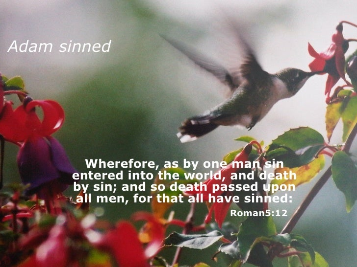 Adam sinned Wherefore, as by one man sin entered into the world, and death by sin; and so death passed upon all men, for t...