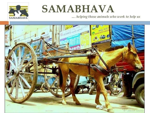 SAMABHAVA …. helping those animals who work to help us
