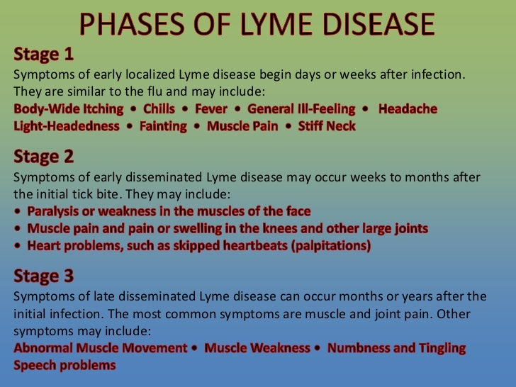 Can You Get Lyme Disease From Your Dog