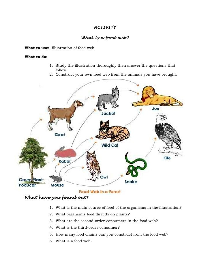 Food Web Worksheet Answers carolinabeachsurfreport – Food Chain and Food Web Worksheet