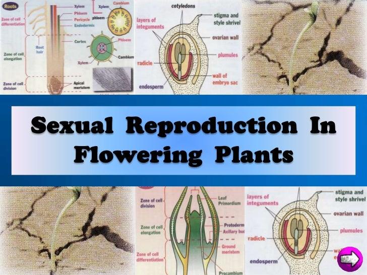 plant reprodutive system