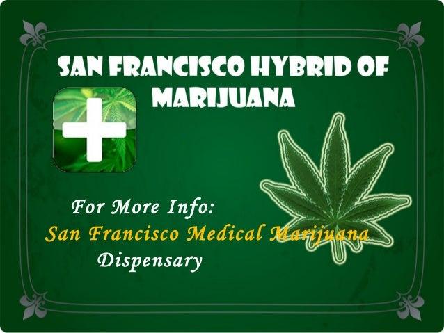 San Francisco Hybrid of Marijuana