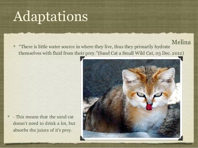 Can A Cat Survive In The Wild