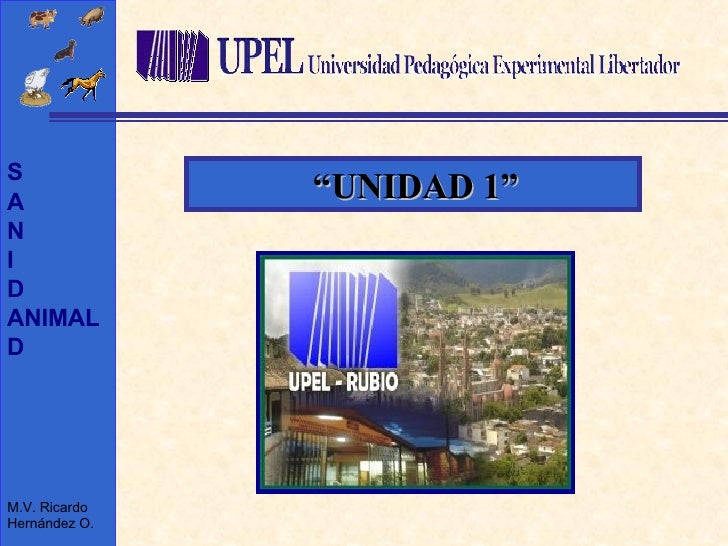 """"""" UNIDAD 1"""""""