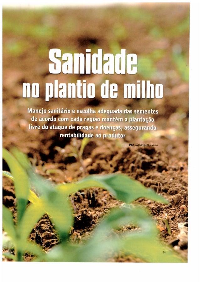 Sanidade no plantio de milho