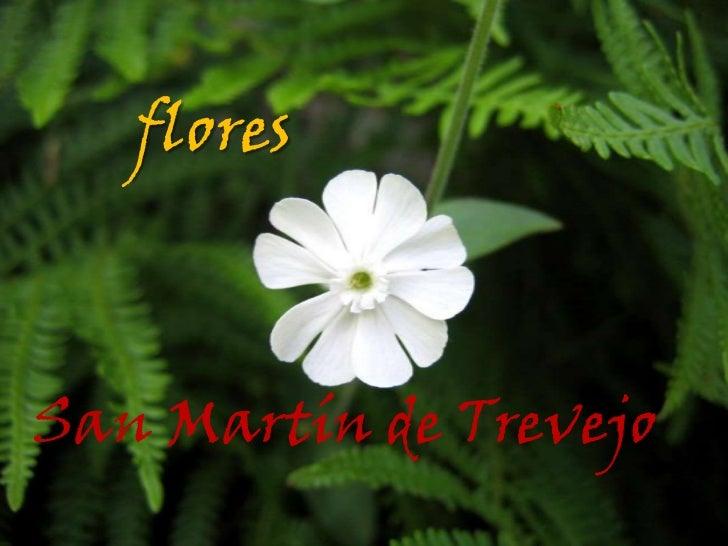 floresSan Martín de Trevejo