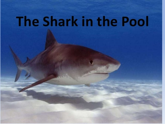 The Shark in the Pool