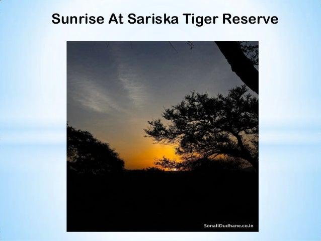 SariskaTiger Reserve