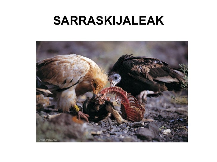 Sarrasijale