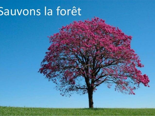 Sauvons la forêt