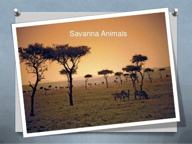Savanna animals fah 3 (1) (1)