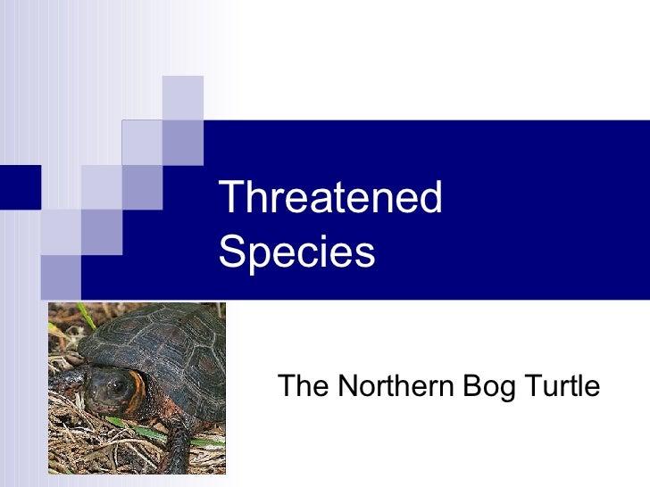 Threatened Species The Northern Bog Turtle