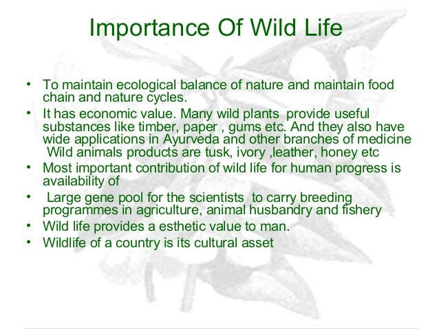 essay on wildlife and its importance Wildlife is an important part of ecological community as wildlife play an important role in the environmentthere are several importance of wildlife as wildlife it self is an important character of nature so its conservation is an save wildlife: importance of wild life saving ecological value.