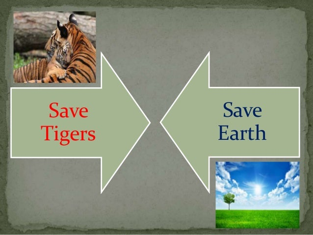 Save Tiger Images Save Tigers Save Earth