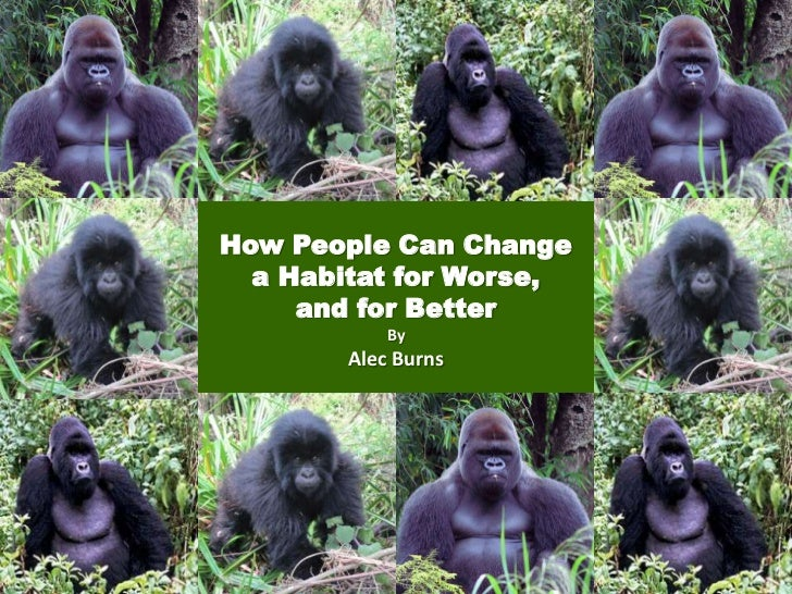 How People Can Change  a Habitat for Worse,     and for Better           By       Alec Burns