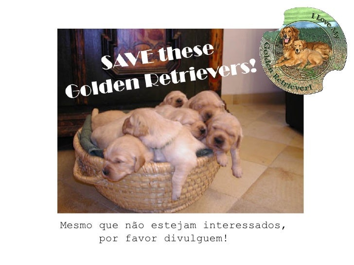 Save these Golden Retrievers