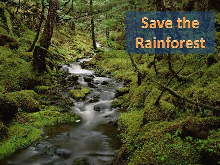 Save the Rainforest<br />