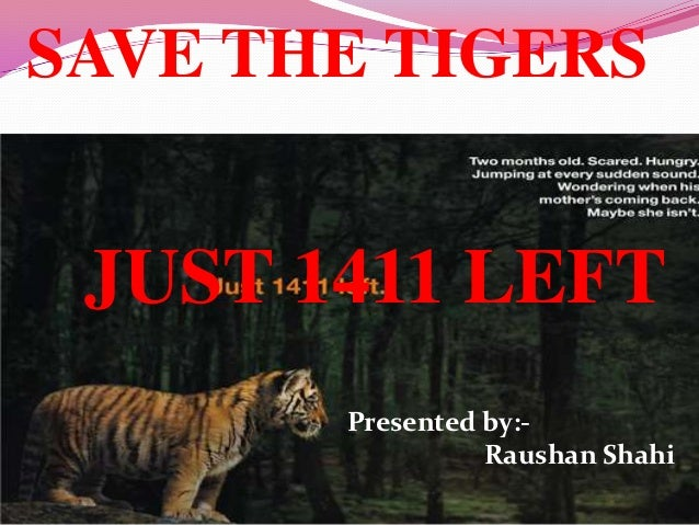 SAVE THE TIGERS JUST 1411 LEFT       Presented by:-                 Raushan Shahi