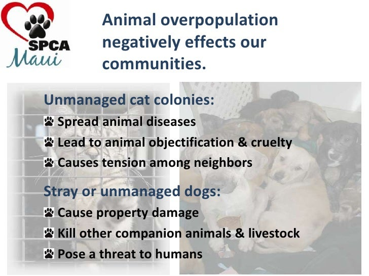 animal abuse summary Usda animal care is responsible for administering the animal welfare act and the horse protection act the animal welfare act establishes requirements concerning the transportation, sale, and handling of certain animals and includes restrictions on the importation of live dogs for purposes of resale, prohibitions on animal fighting ventures.