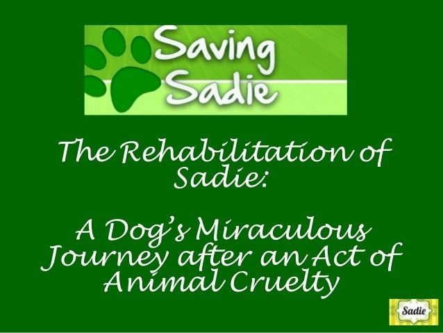 Saving Sadie: A Dog's Miraculous Journey after an Act of Animal Cruelty