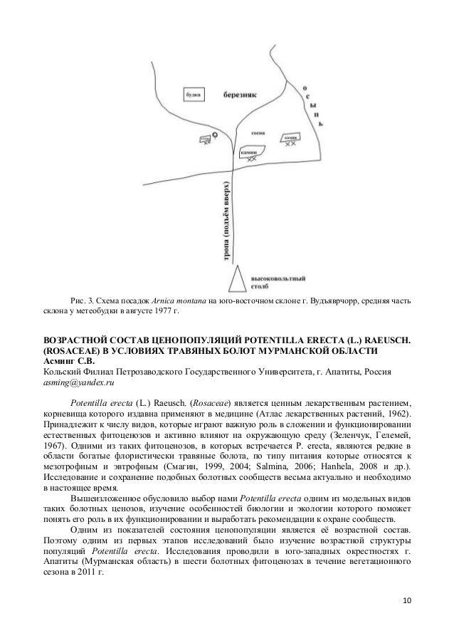 Схема посадок Arnica montana