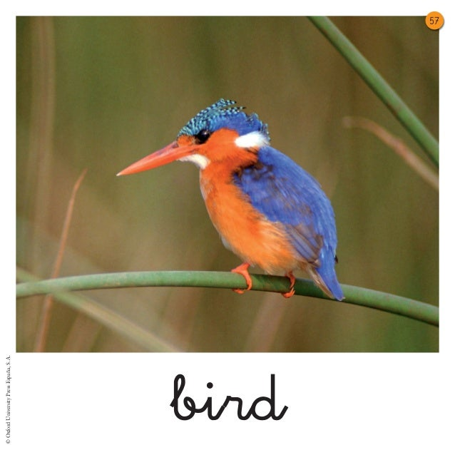 © Oxford University Press España, S. A.bird                                          57