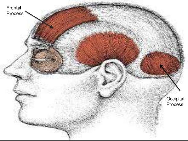 Vertex anatomy