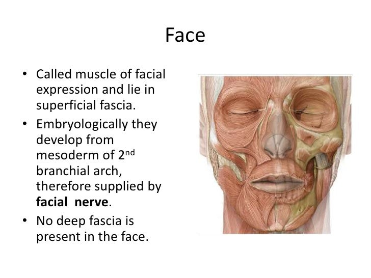 Surface anatomy of the face