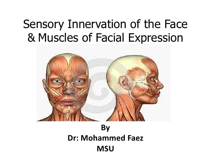 Sensory Innervationof the Face &Muscles of Facial Expression<br />By<br />Dr: Mohammed Faez<br />MSU<br />