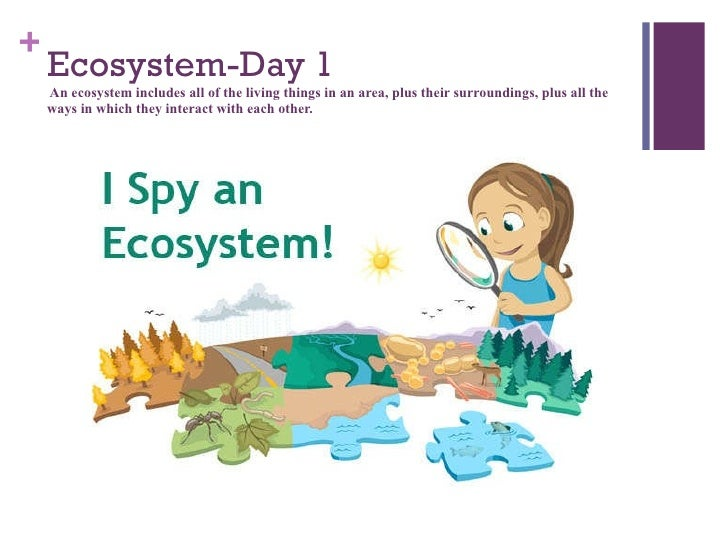 life science lesson on animals k Understanding weather and climate– lesson 1: our ideas about weather   kindergarten  life cycle of butterflies– literacy integration: nonfiction 1 -  multiple  how can we know about the reproductive cycle of an animal by its  poop.
