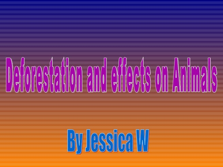 Deforestation and effects on Animals By Jessica W