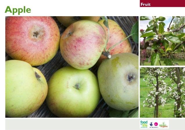 Apple  Fruit