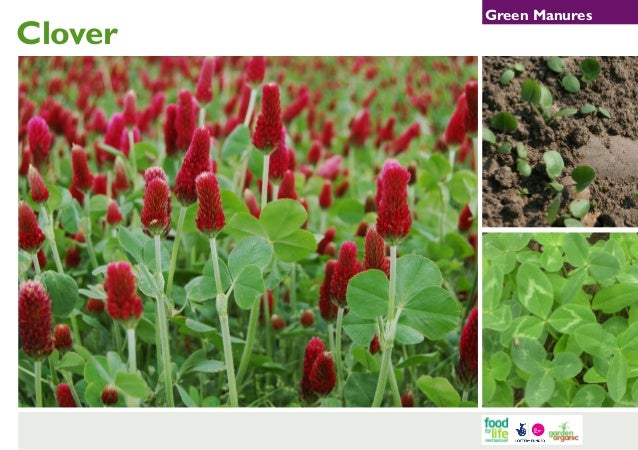 Green Manures ~ Teacher Guide, Organic Gardening