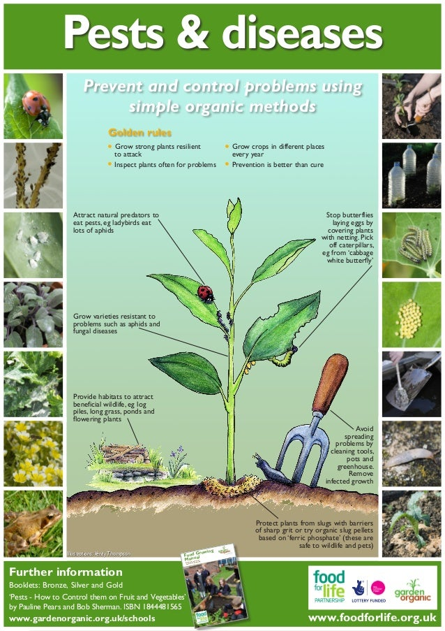Pest And Plant Disease Teacher Guide Organic Gardening