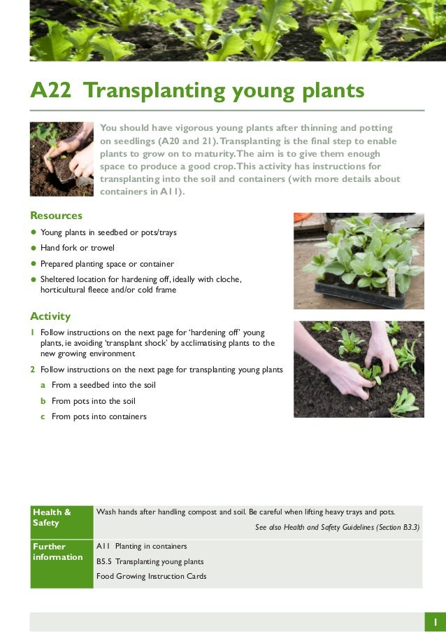 A22 Transplanting young plants You should have vigorous young plants after thinning and potting on seedlings (A20 and 21)....