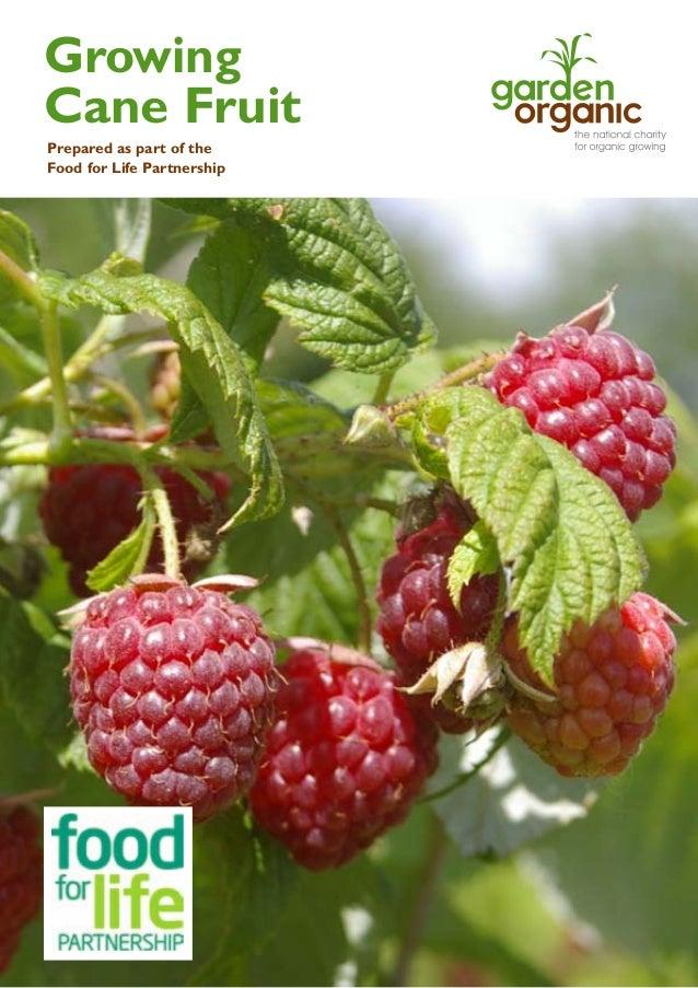 Cane Fruit Gardening Guides for Teachers