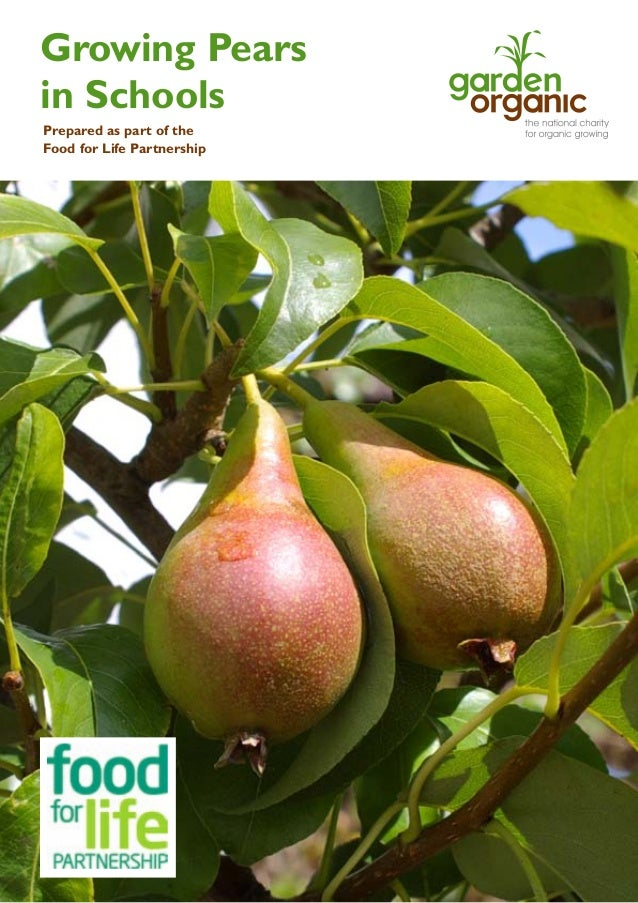 Growing Pears in Schools Prepared as part of the Food for Life Partnership