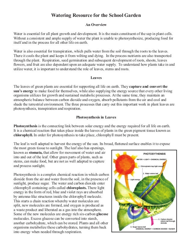 Watering Resource for the School Garden An Overview Water is essential for all plant growth and development. It is the mai...