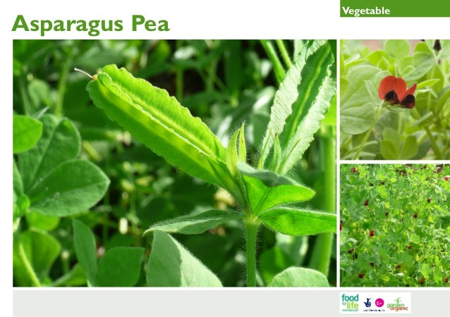 Asparagus Pea Gardening Guides for Teachers