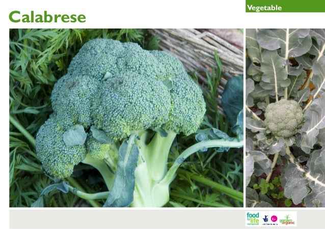 Calabrese  Vegetable
