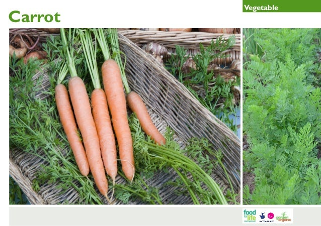 Carrot Gardening Guides for Teachers
