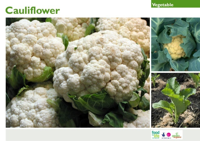 Cauliflower Gardening Guides for Teachers