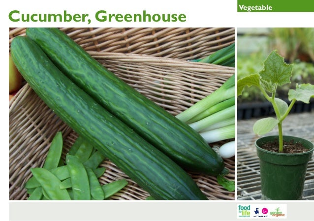 Greenhouse Cucumber Gardening Guides for Teachers