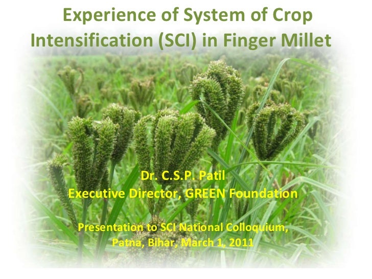 1162 Experience of System of Crop Intensification (SCI) in Finger Millet
