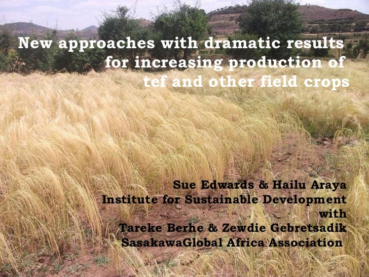New approaches with dramatic results  for increasing production of  tef and other field crops Sue Edwards & Hailu Araya In...