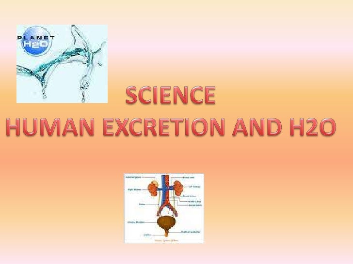 SCIENCE<br />HUMAN EXCRETION AND H2O<br />