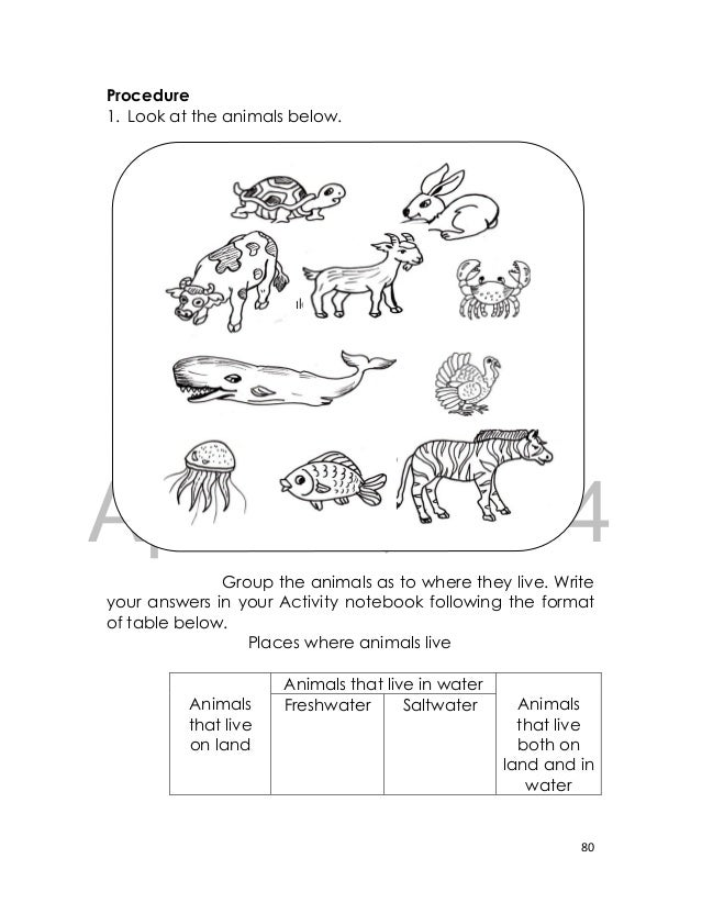 whale worksheets