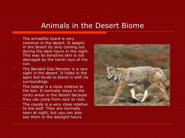 Animals in the Desert Biome <ul><li>The armadillo lizard is very common in the desert. It adapts in the desert by only com...