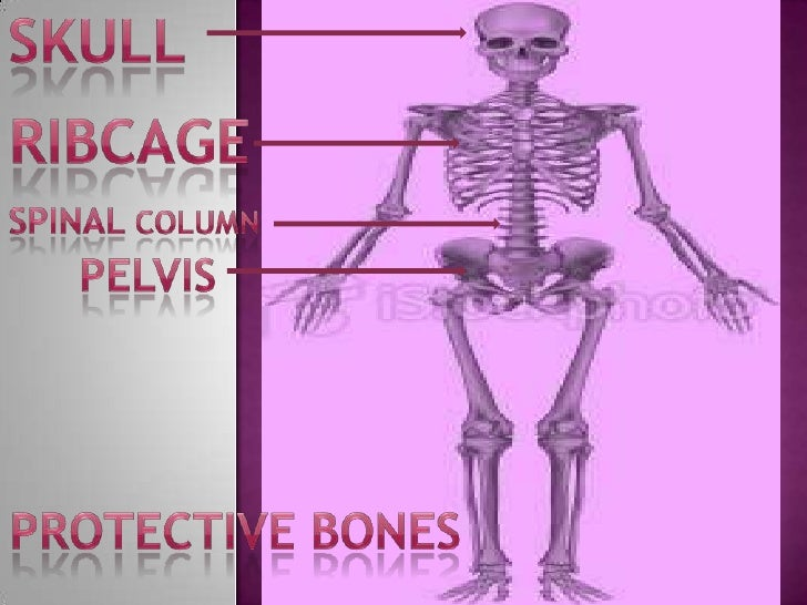 Science bones